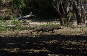 komodo island tour package